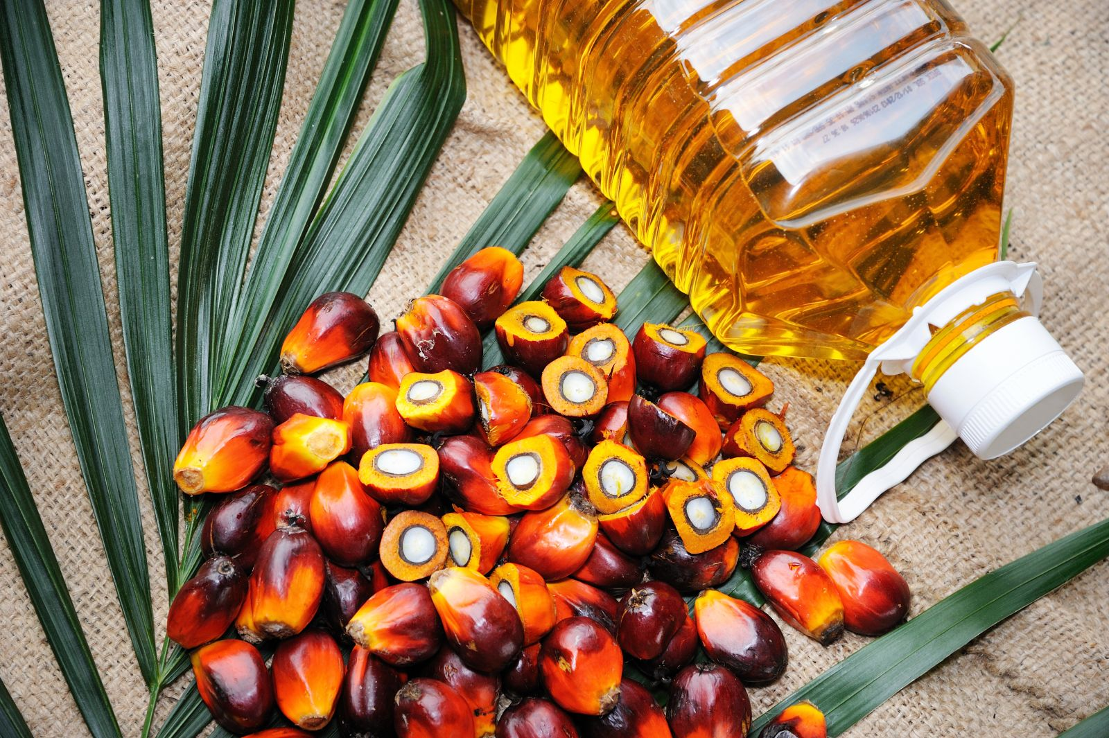 Palm Oil Versus Palm Kernel Oil: Which Is Better?