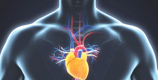 aneurysms chest aorta