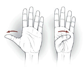 Thumb flexion/extension exercise