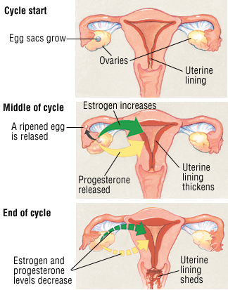 Menopause and perimenopause symptoms