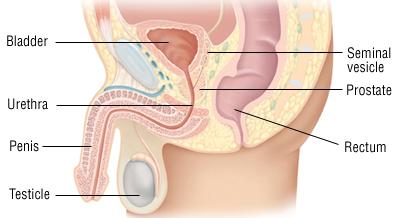 prostate inflammation after ejaculation