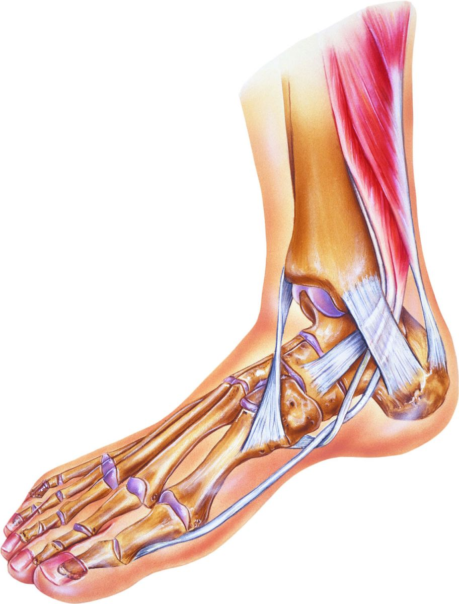 What to do for a sprained ankle - Harvard Health